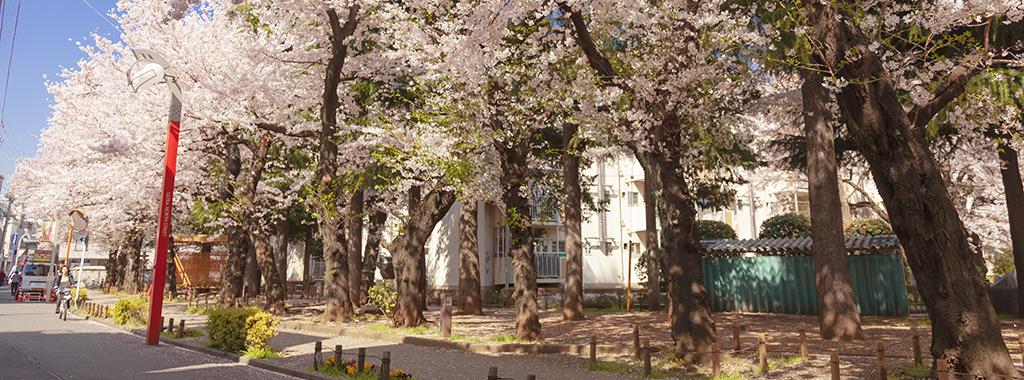 春1(さくらと快晴)